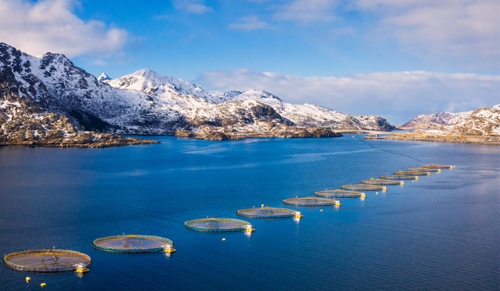 An open water salmon farm with blue skies, sea, mountains